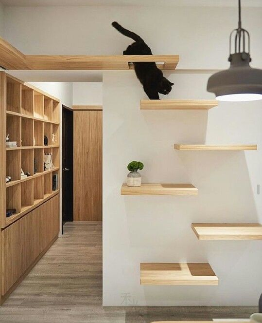 a minimalist cat tree that consists of platforms attached to the wall won't spoil your interior