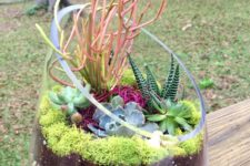 15 large containers may be also used for growing your succulents and cacti, if it's cold, just take them inside