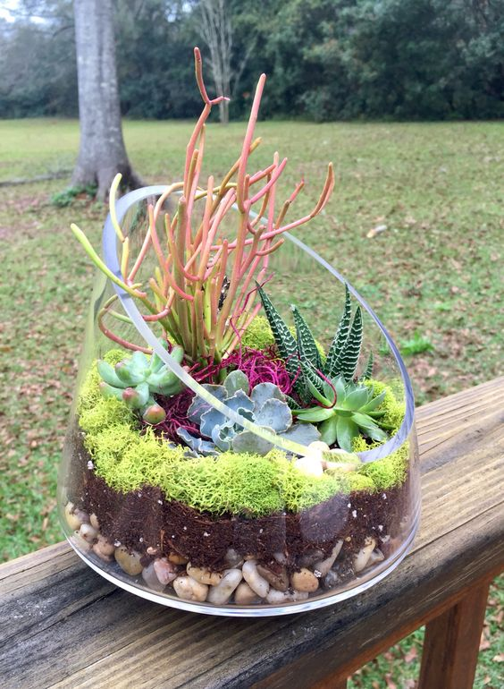 large containers may be also used for growing your succulents and cacti, if it's cold, just take them inside
