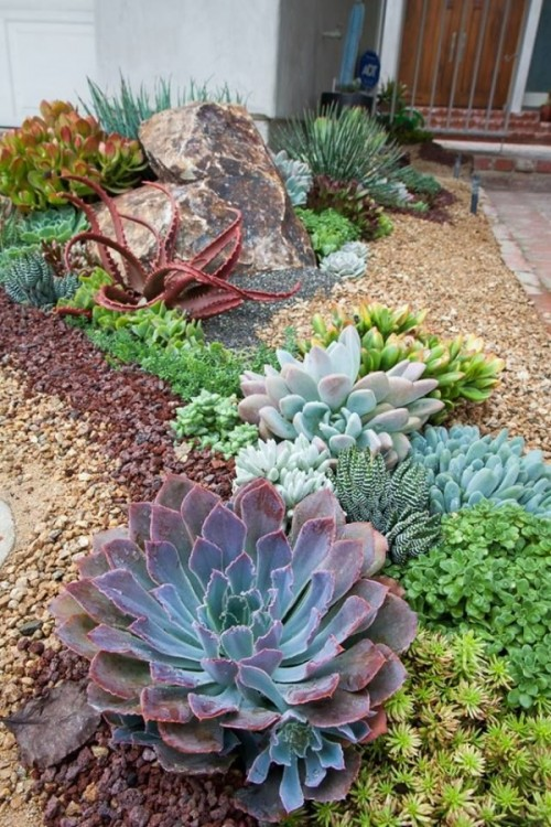smaller and larger succulents of various shades and looks combined to create a cohesive look