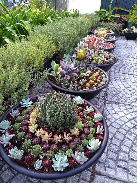 title | Succulent Garden Ideas