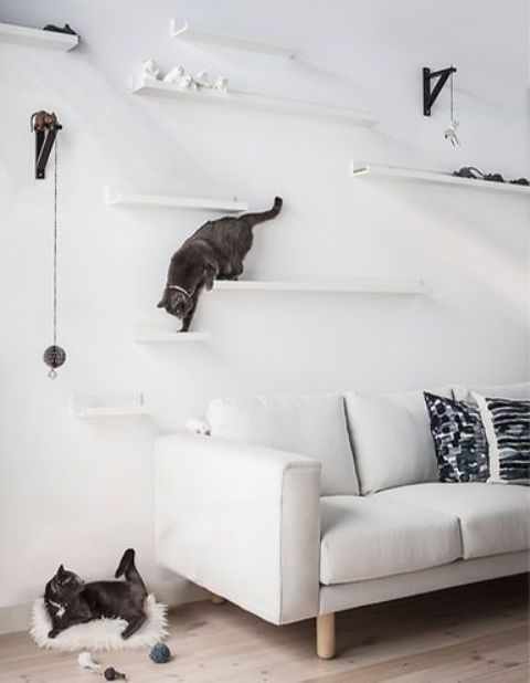 a modern cat climber built of ledges and shelves plus cat toys hanging right on the wall