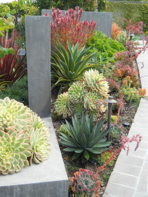 bold and chic succulents combined with agaves in various shades of green and yellow