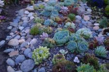 17 mix up various succulents with larger and smaller pebbles and rocks for a more natural landscape