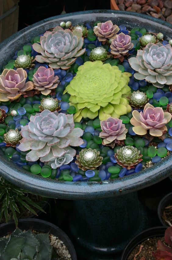 accent your succulents in the containers with colorful glass pebbles like these ones