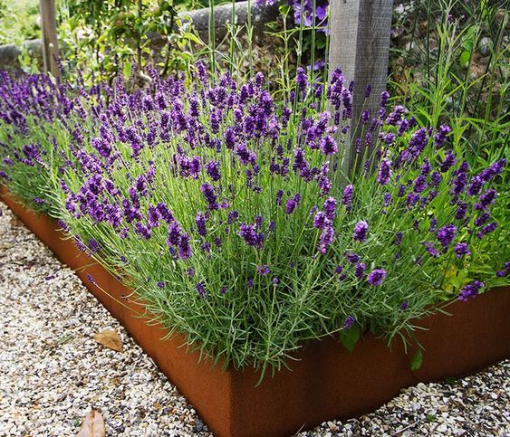 patina metal garden bed edging with bright purple blooms composes a gorgeous combo