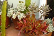 19 rock same terra cotta pots with various succulents to give your garden a more cohesive look