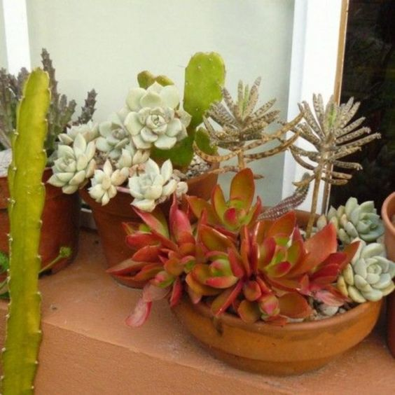 rock same terra cotta pots with various succulents to give your garden a more cohesive look