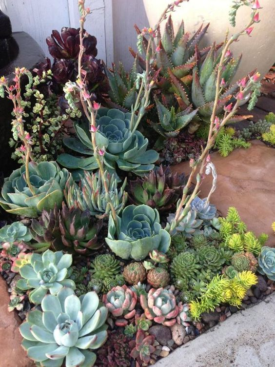 combine several different textures, heights, sizes and colors to make your desert succulent garden more spectacular