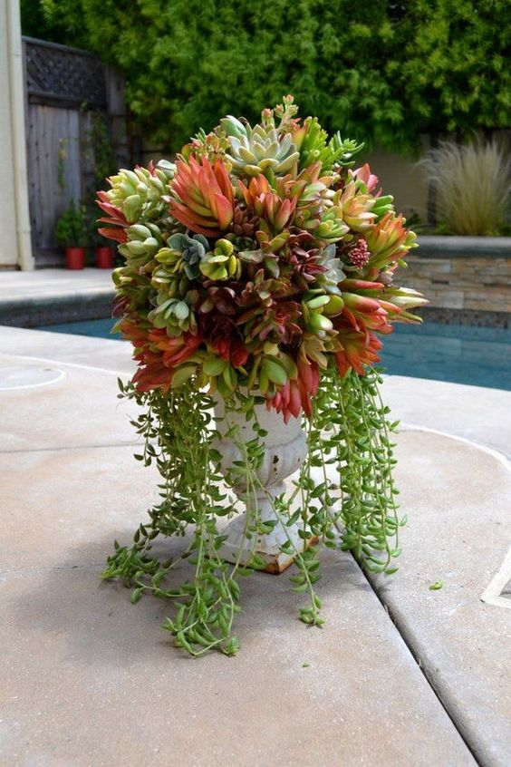 a vintage run with various succulents including cascading ones is a cool decor idea with a touch of chic