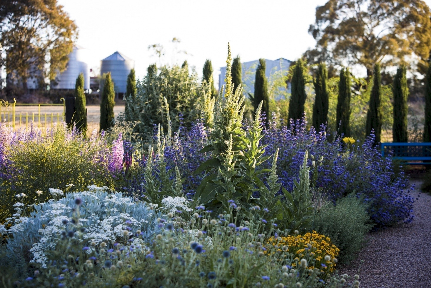 silver foliage is a great idea for a low water garden as it's drought resistant