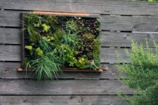 23 create a succulent vertical garden as an artwork and part of landscaping, it won't take much space