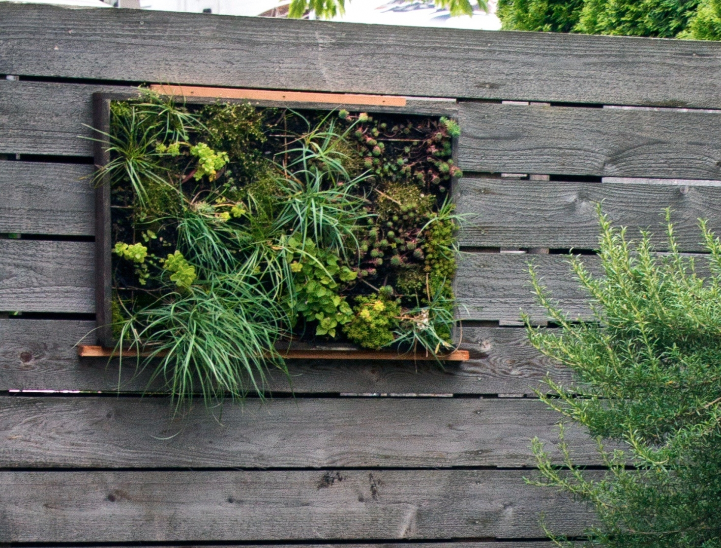 create a succulent vertical garden as an artwork and part of landscaping, it won't take much space