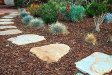 24 grasses of various kinds are perfect for growing them in low water gardens