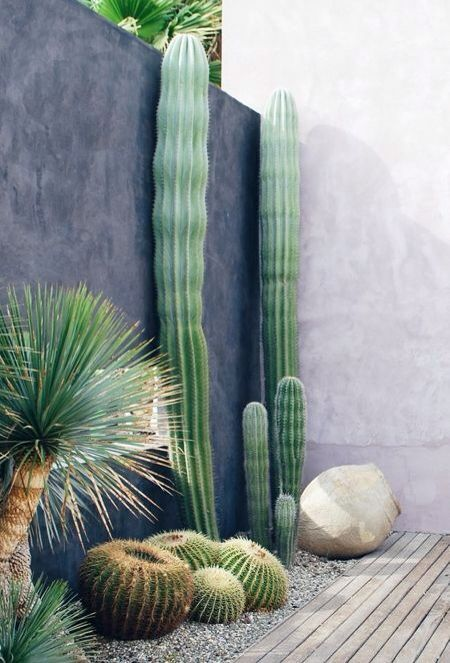 post cacti like these ones are very tall and catchy, they will make a bold statement in your garden