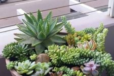 25 a concrete bowl with larger and smaller succulents and cascading ones going down