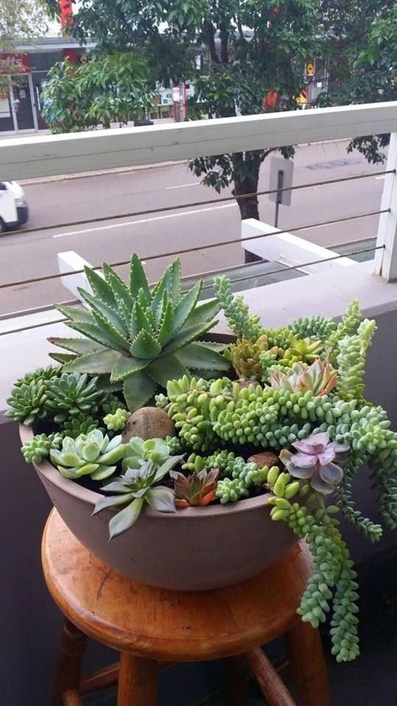 a concrete bowl with larger and smaller succulents and cascading ones going down