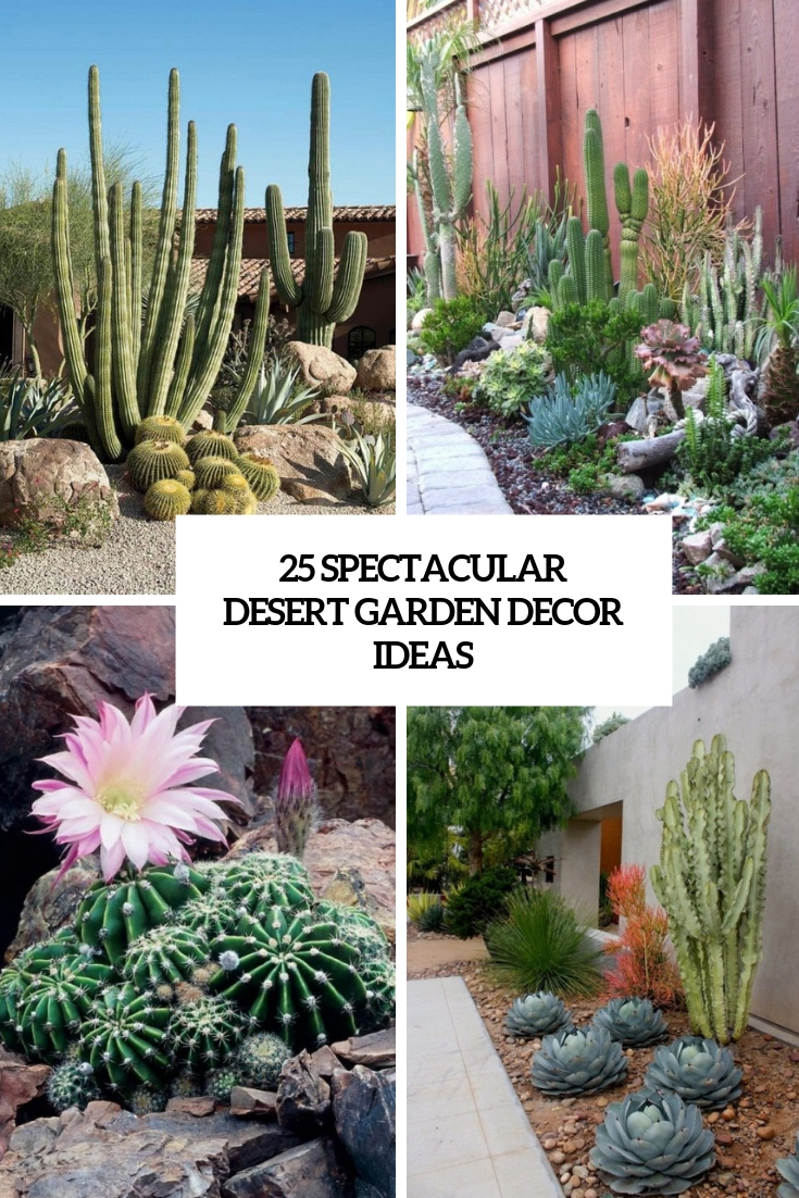 spectacular desert garden decor ideas cover