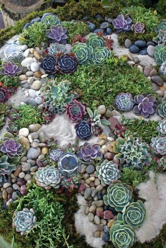 a chic succulent garden with sand, pebbles and various types of succulents in beautiful shades