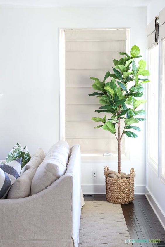 a fiddle leaf fig in a woven pot will be a nice statement plant in your coastal home