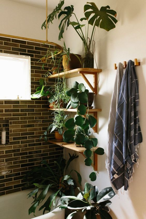 open shelving with potted greenery and some plants on the bathtub to feel like outdoors