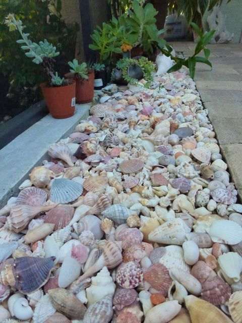 seashell garden edging is ideal for a beachside or seaside garden, it's an easy idea to rock