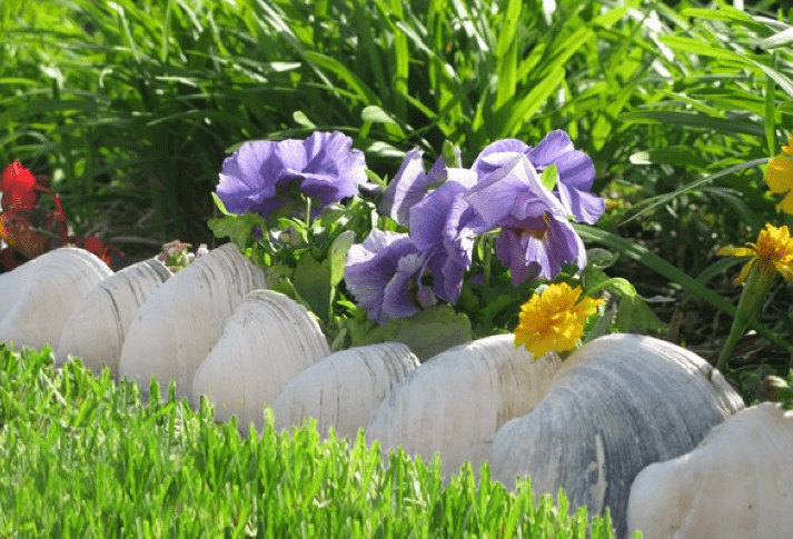 large clam shells will border a seaside garden embracing the location at the same time