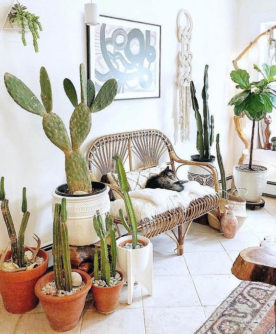 a bright boho summer entryway done with lots of cacti, a rattan bench with pillows and macrame