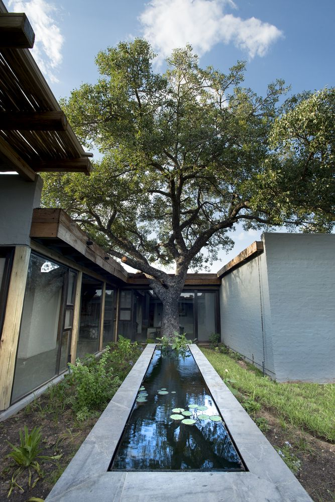 The courtyard features living trees and a pond clad with concrete, there lots of living trees on the site, and all of them are preserved