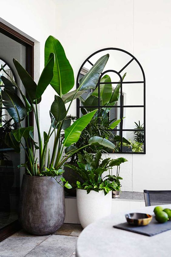 a statement plant in a large concrete pot and some more greenery in pots around to make the space feel natural