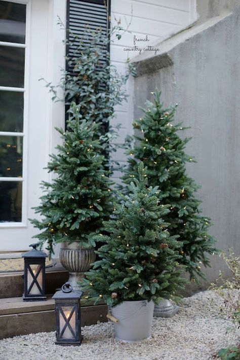 a cluster of undecorated Christmas trees with lights and some lanterns by them make up cool outdoor decor