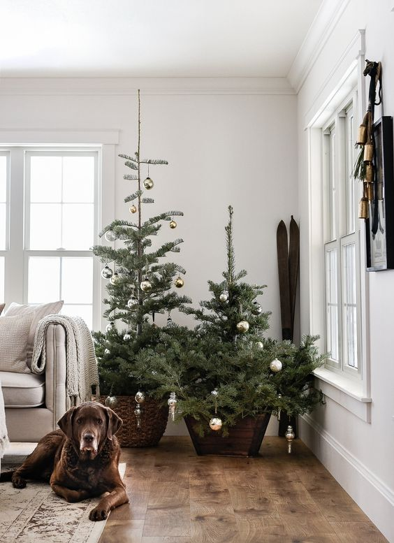 a duo of Christmas trees in a wooden pot and a basket with some silver Christmas ornaments on them
