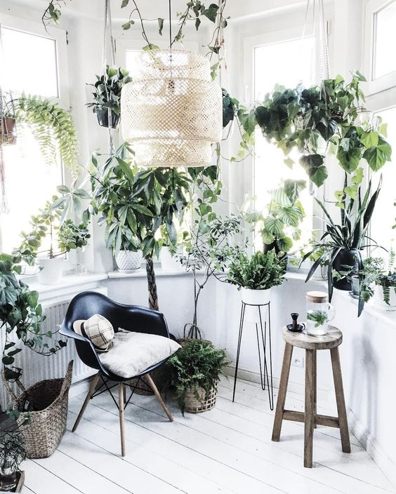 a minimalist biophilic space done in white, with many windows for natural light and potted plants all over