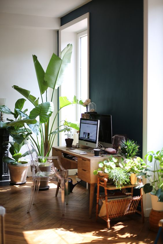 a mid century modern tropical home office with a vintage wooden desk, a ghost chair, lots of tropical plants everywhere