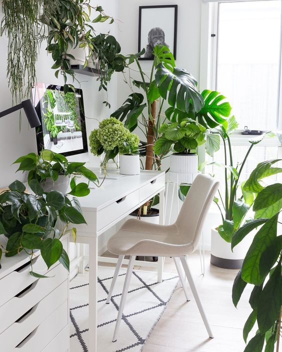 a neutral and airy home office with IKEA furniture, some simple artworks and potted tropical plants everywhere