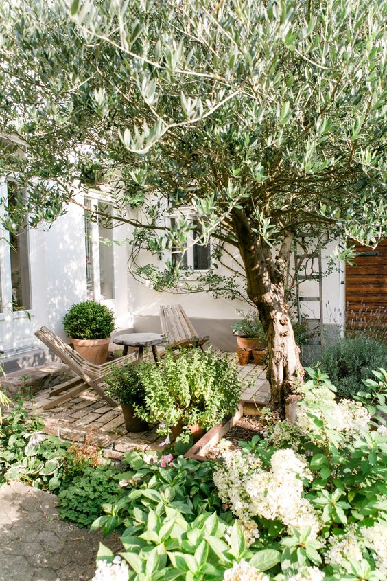 a small and cozy backyard with a brick clad space, some wooden chairs and lots of greenery and a tree around
