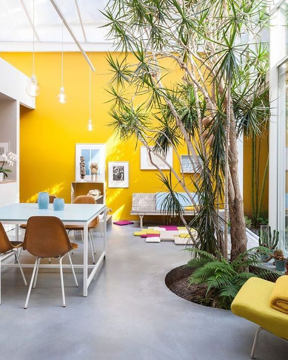 a bright contemporary living room and dining room with a yellow accent wall, catchy furniture, living trees and touches of blue