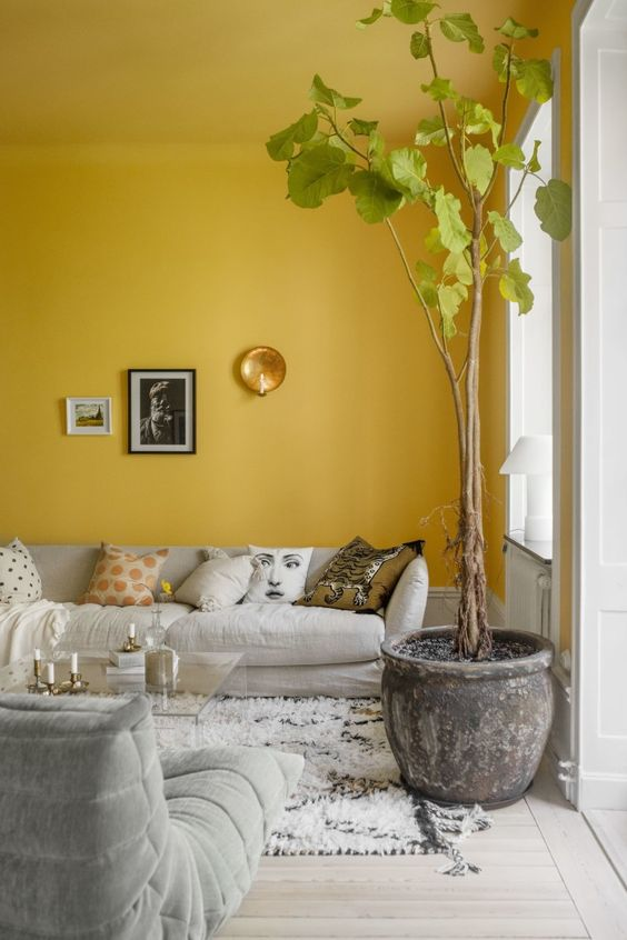 a mustard living room with dove grey furniture, an acrylic coffee table and a statement potted plant is a bold idea