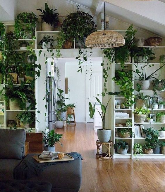 a whole wall with an open storage unit fully done with potted greenery and plants of various kinds is amazing