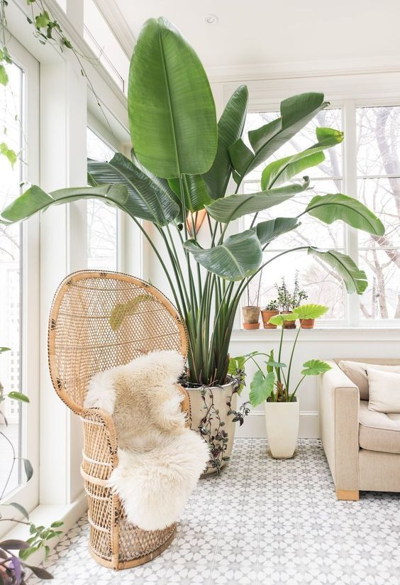 a cozy and light filled nook with neutral furniture and indoor statement plants, with a rattan chair and a sofa