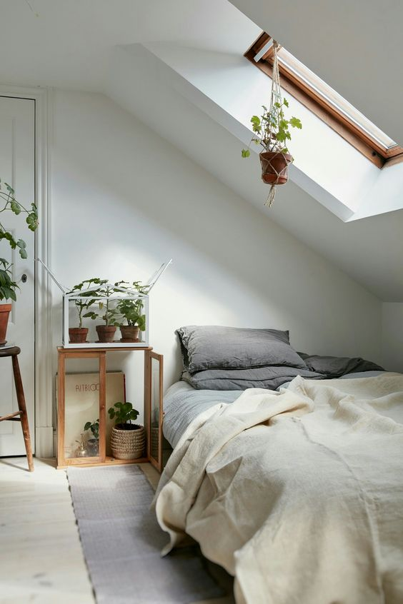 a cozy natural attic bedroom with a skylight lets enjoying sunlight in the morning and lots of potted plants that enjoy this light