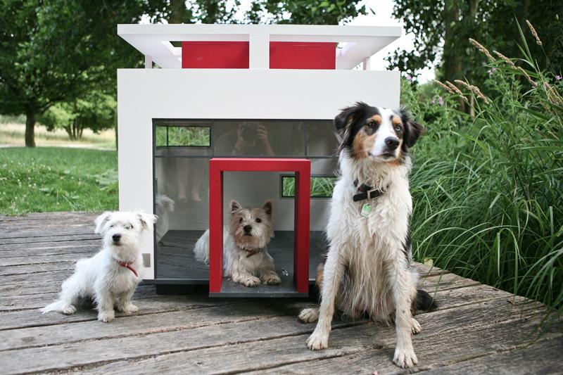 decorazione recinto Cani : cuccia per cani da esterno des photos, des photos de fond, fond d ...