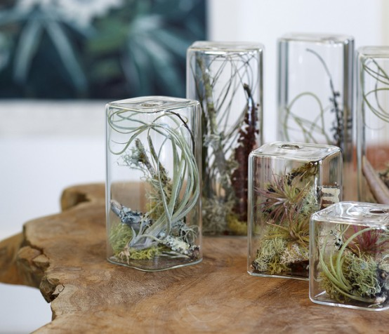 Stylish Cube Aeriums To Make A Miniature Garden On A Desktop