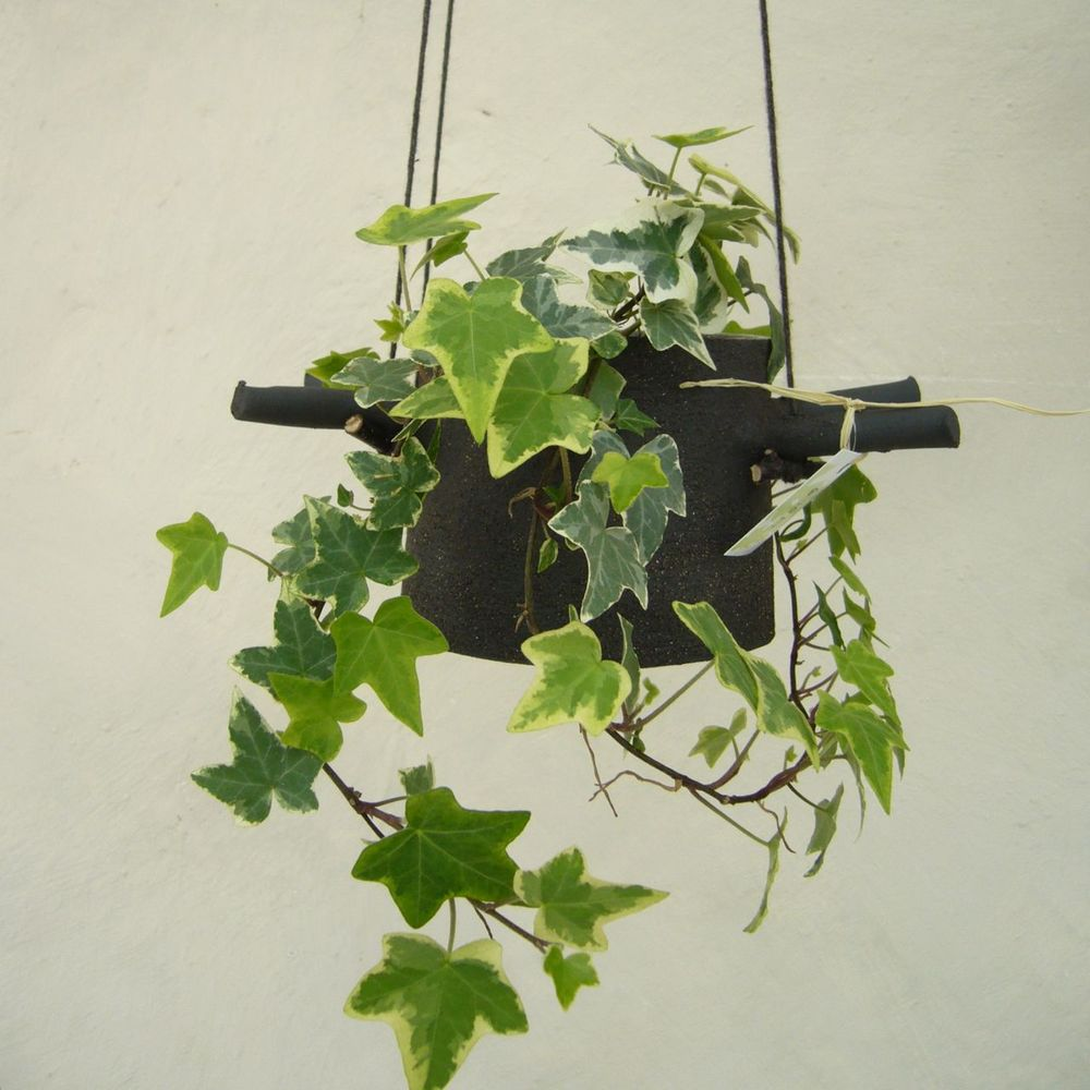 Hanging Flower Pots With Horns From Which They Hangs