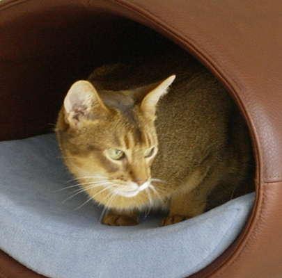 Modern Cat Beds Rondo By Meyer