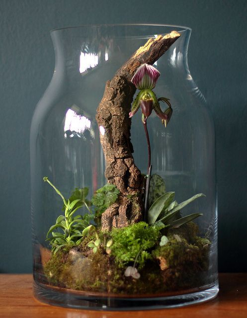 45 adorable spring terrariums for home d cor digsdigs - Plant decorating ideas tasteful nature ...