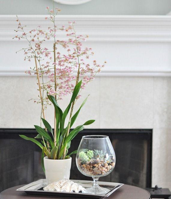 Adorable Spring Terrariums For Home Decor