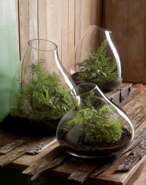 45 Adorable Spring Terrariums For Home Décor