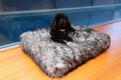 an oversized faux fur cushion or pet bed is a lovely and super warm and cozy idea to rock