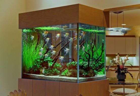 an large aquarium enclosed in plywood is a stylish decor feature and a space divider that rocks